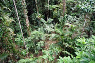 Bild: Regenwald im Daintree Nationalpark - Reiseblog von Frank Seidel